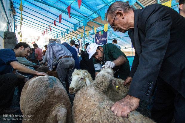 ذبح گوسفند در منزل خطر شیوع بیماری های مشترک را بدنبال دارد