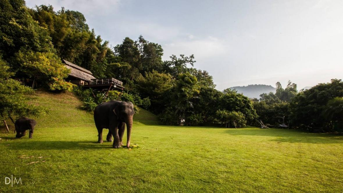 طراحی هتل درختی در تایلند