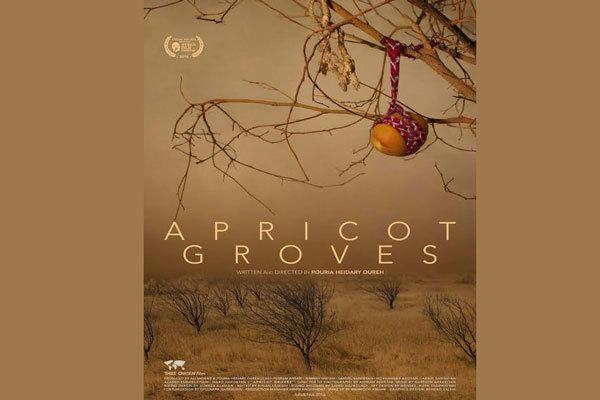 رونمایی از اولین پوستر فیلم سینمایی باغ های زردآلو