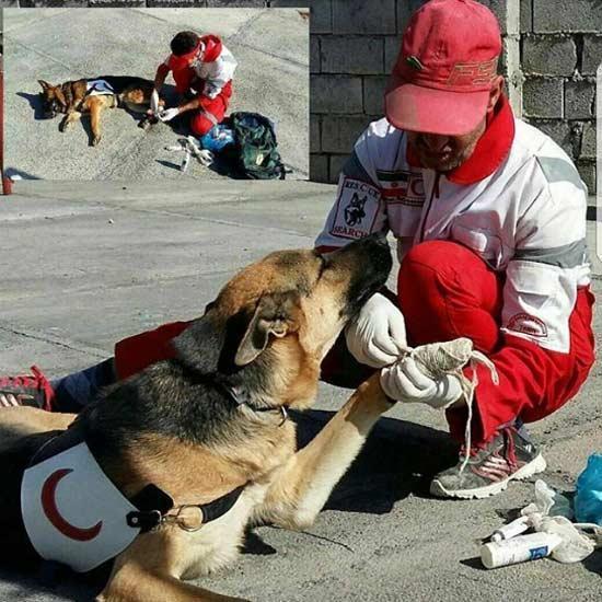 پریناز ایزدیار: سگ ها نجس نیستند