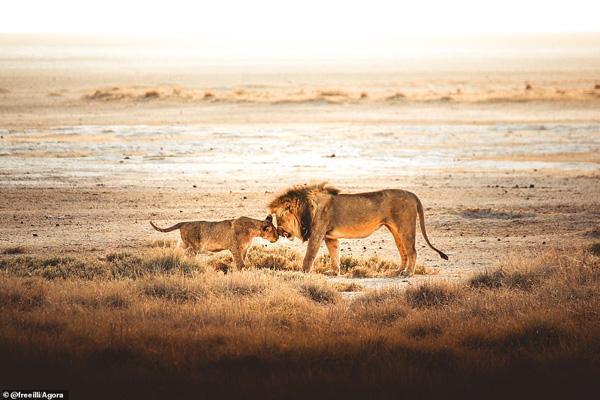 تصاویر برگزیده طبیعت و حیات وحش در سال 2020