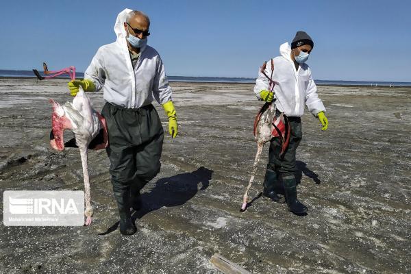 خبرنگاران شیوع آنفلوانزای پرندگان؛ از هشدار تا مهار آن در کشور